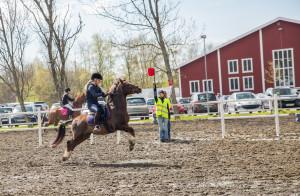 Hästens dag